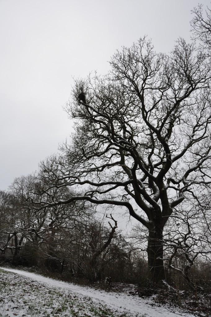 Snow Hampstead Heath