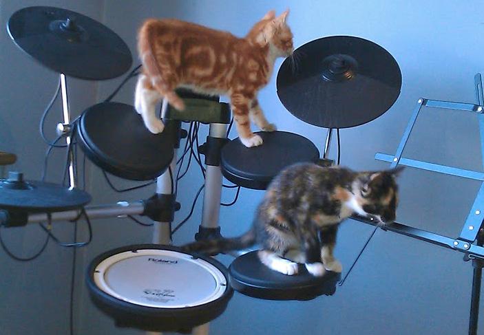 Kittens + drumkit = ?
