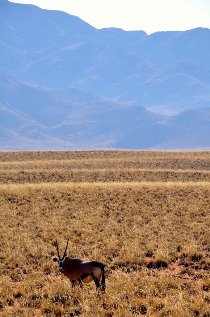 Ibex View Namib Naukluft