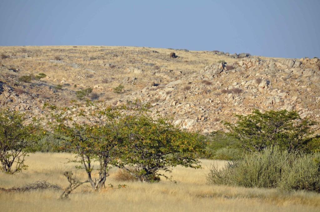 Desert Elephant Spotting