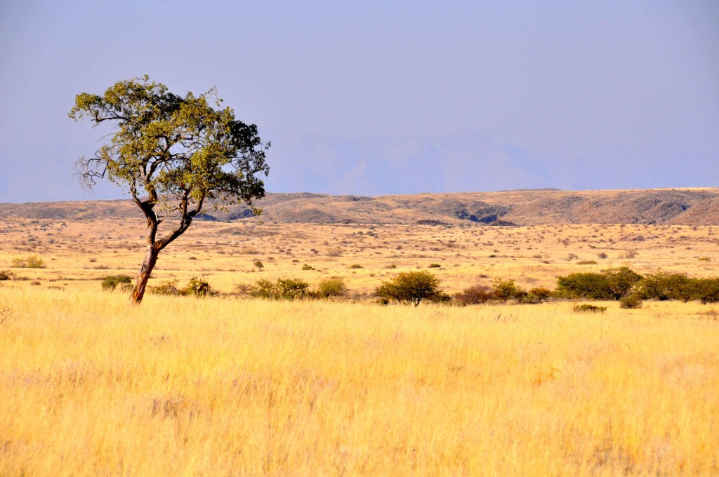 Damaraland, Desert