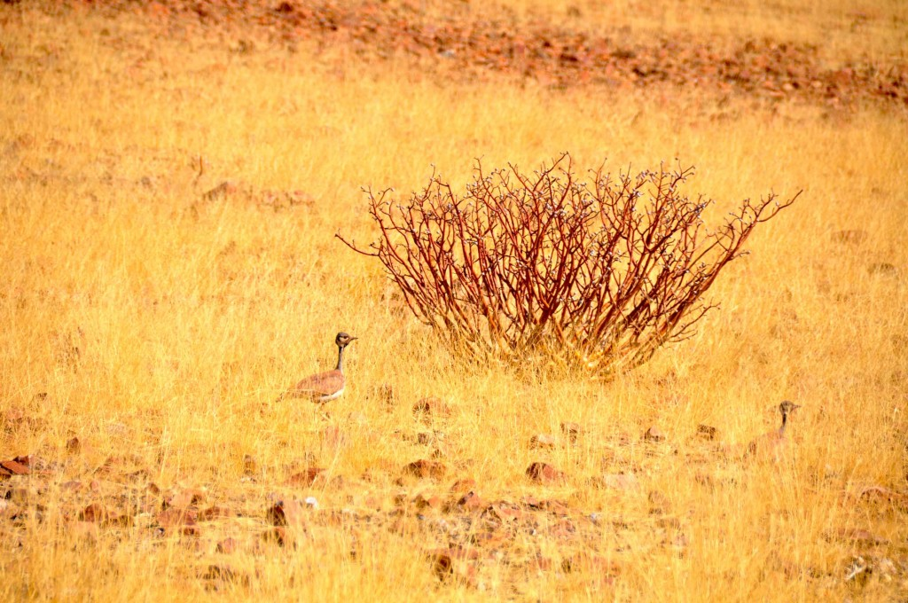 Desert Damaraland