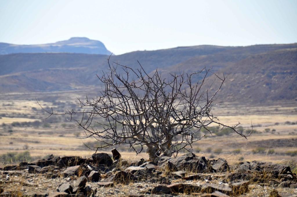 Desert, damaraland
