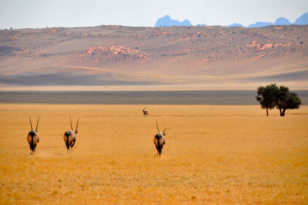 Heading Home Namib Naukluft