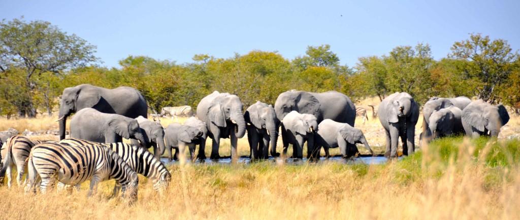 Herd, Etosha Waterhole