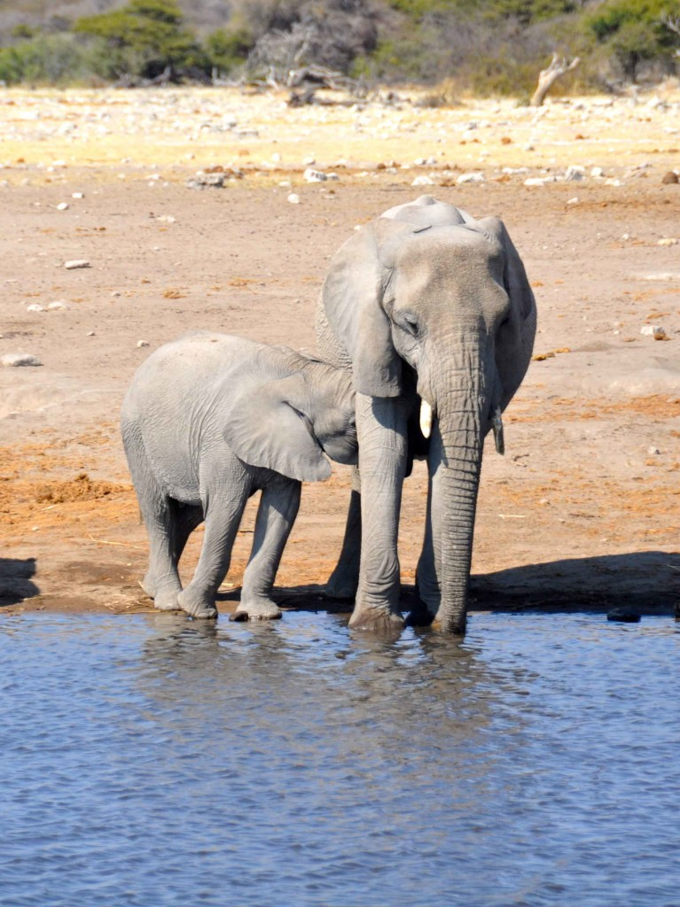 Mother & Child Etosha